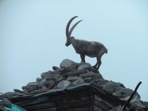 Monte Rosa helyi lakos a háztetőn